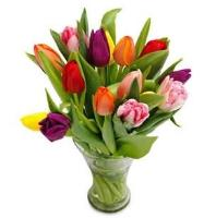 5614 - Mixed Tulips