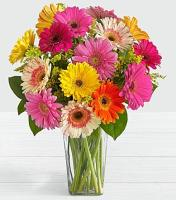 9866 - Cheerful Gerberas