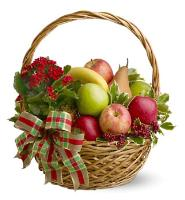 5310 - Plant Fruit Basket