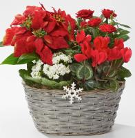 3650 - Holiday Garden Basket