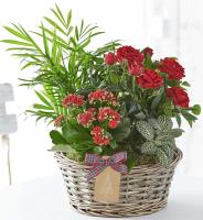 5038 - Holiday Plant Arrangement
